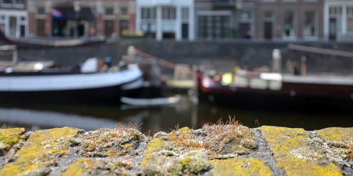 Close up of moss and other small vegetation on an old brick wall in Delfshaven, Rotterdam, with boats, quay and houses out of focus in the background