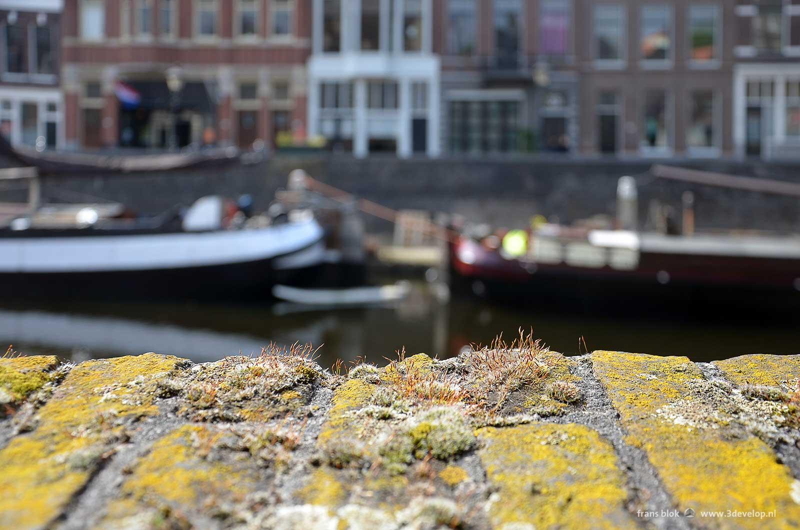Close up van mos en andere kleinschalige begroeiing op een oud bakstenen muurtje in Delfshaven, Rotterdam met schepen, kade en panden onscherp op de achtergrond