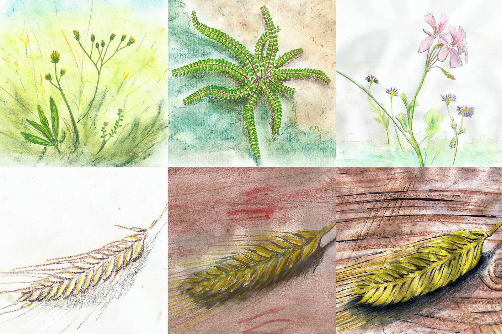 Schetsen van diverse planten die voorkomen rond de moulin d'Orsennes in Frankrijk, handgetekend met traditionele materialen als potlood, krijt en viltstift, op papier