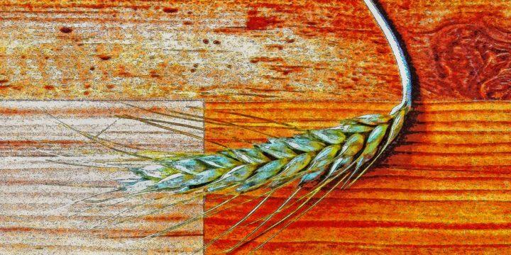 Met behulp van Photoshop gemaakte computerschets van een korenaar op een laminaatvloer