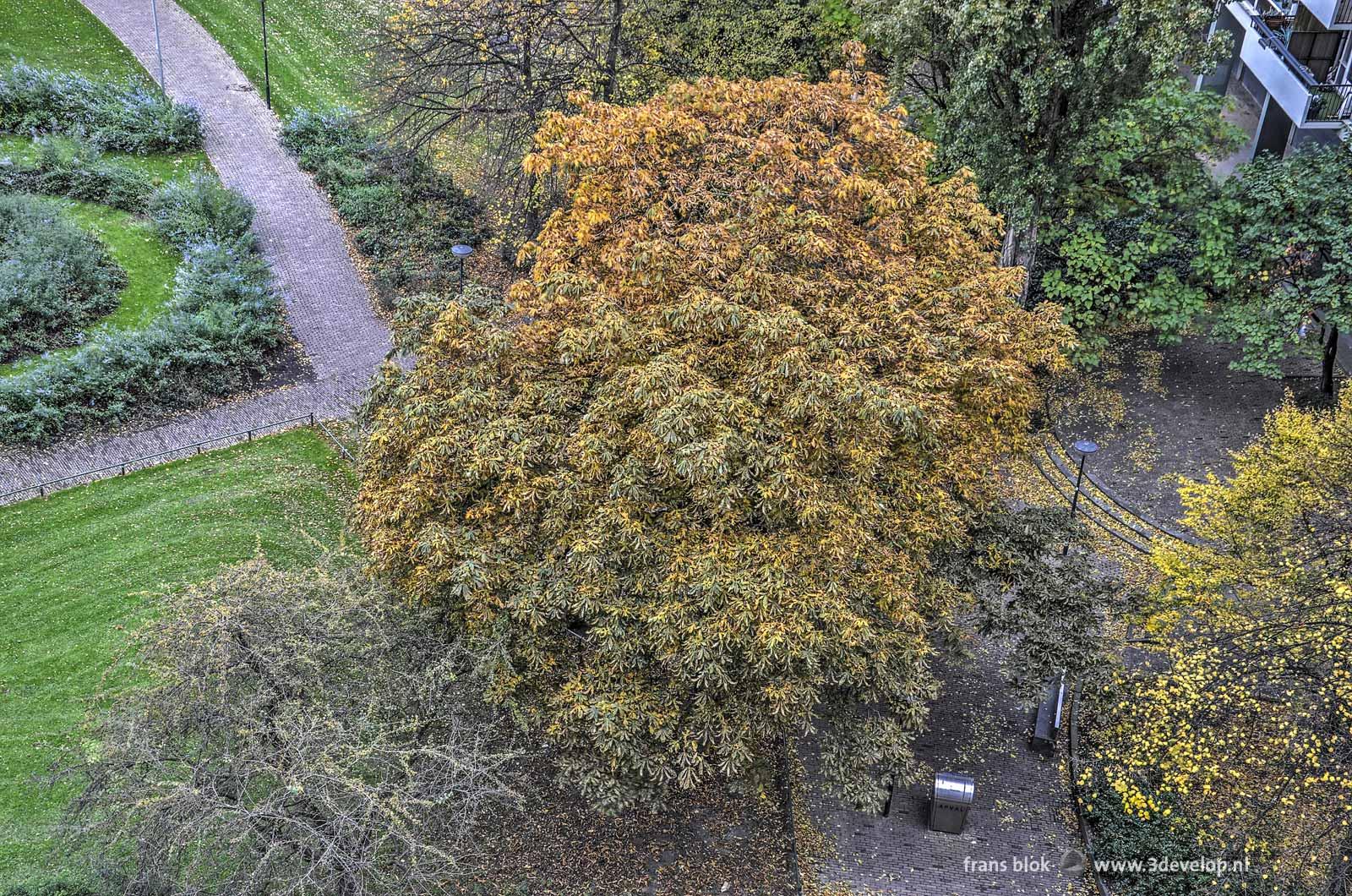 De kastanjeboom in een van de Lijnbaanhoven tijdens de herfst, gezien van boven
