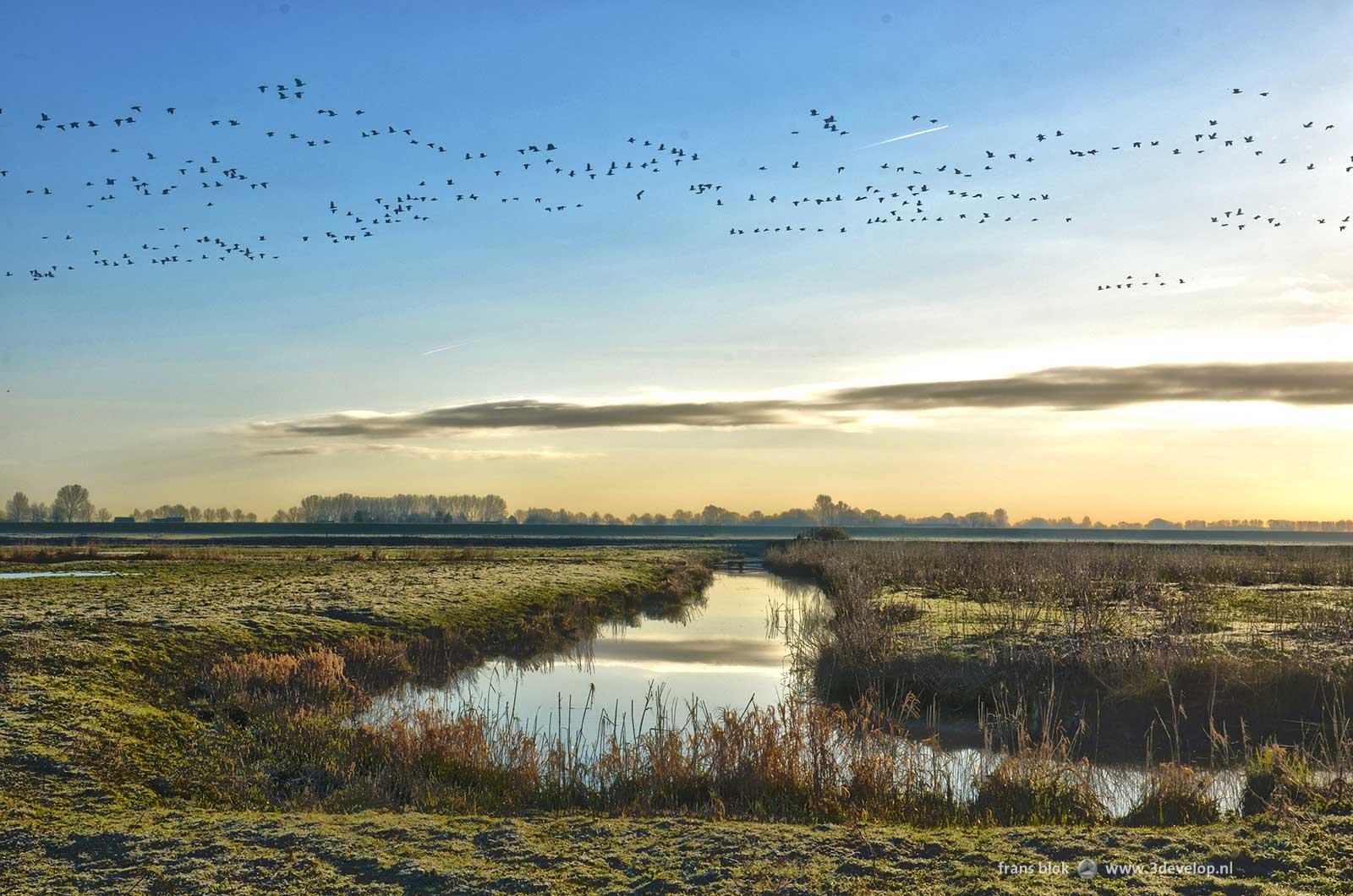 Foto van de Korendijkse Slikken op Paasochtend 2015: een sloot, berijpte velden en een vlucht ganzen