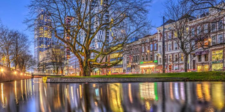 Evening photograph of Rotterdam: Westersingel during the blue hour, with Codarts Art School and Calypso building in the background and a very old plane tree in the foreground