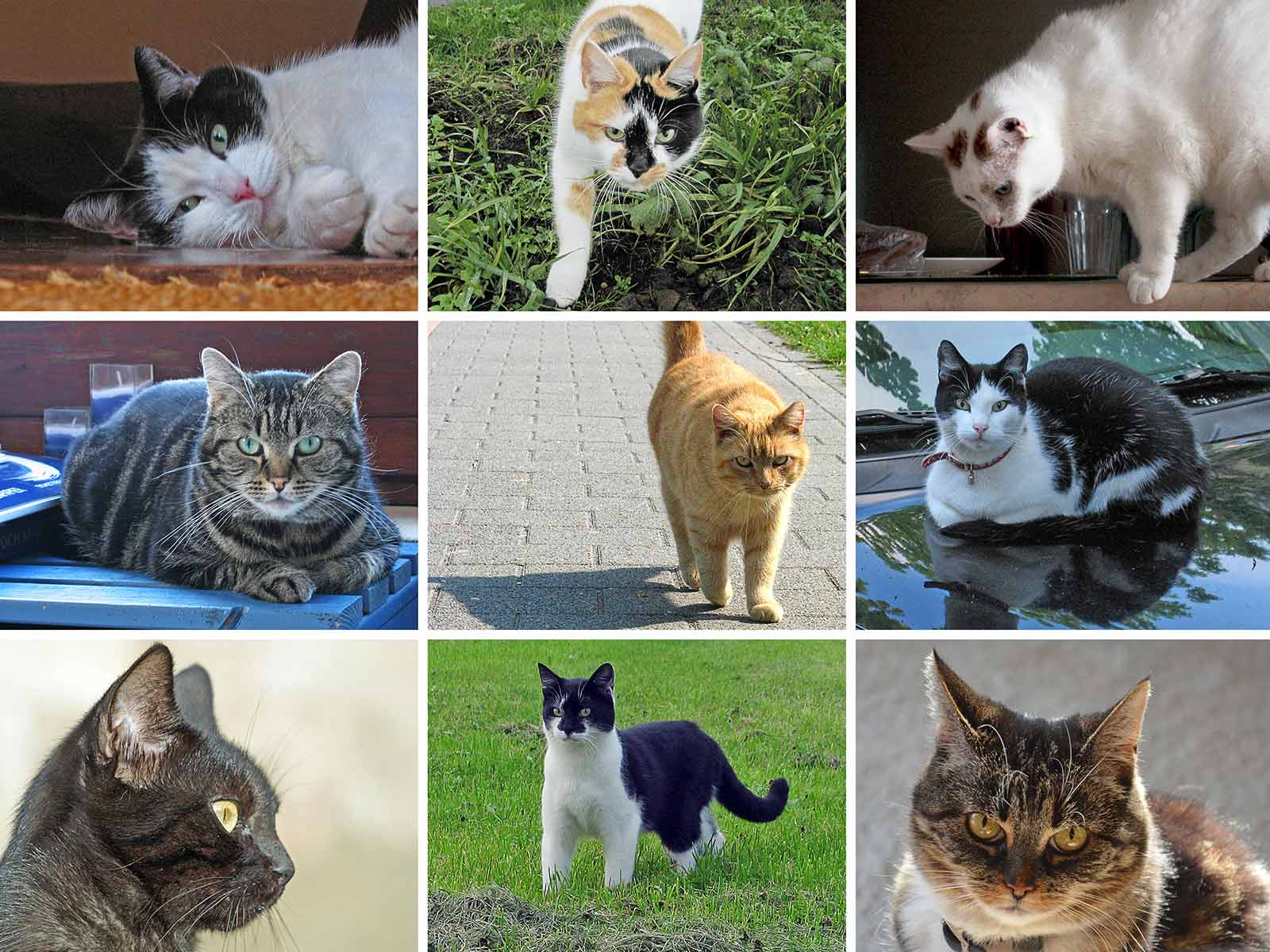 Grid with three by three photo's of cats in different situations