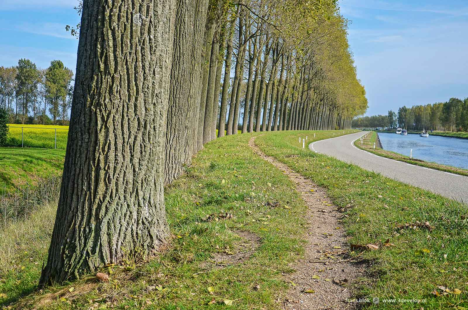 Hiking track and line of trees along the Harbour canal of the city of Goes on the island of Zuid-Beveland, Netherlands.
