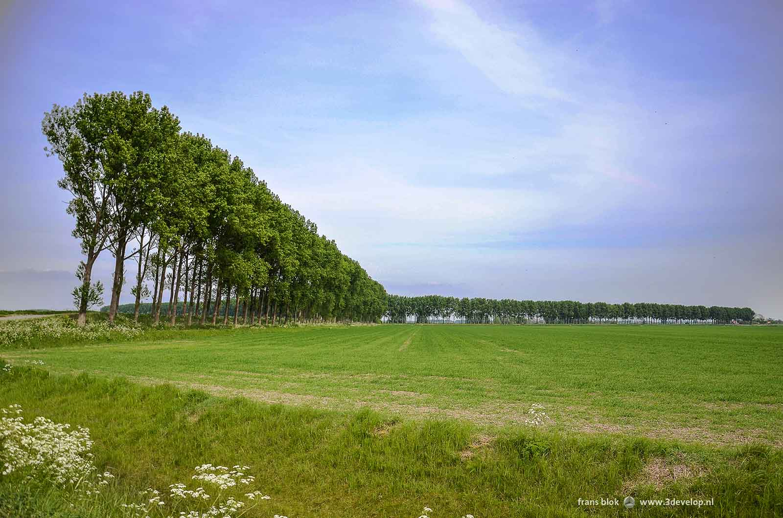 Landscape in the Dutch province of Zeeland, with fields, dikes and rows of trees near the village of Wolphaartsdijk
