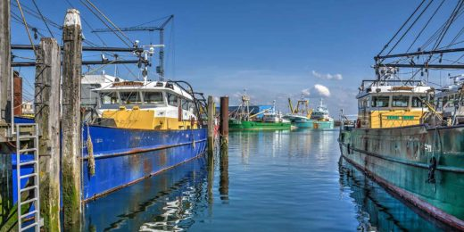 Colorful fishing boats in Yerseke harbour, Zeeland, the Netherlands, on a sunny day