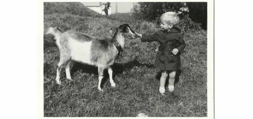Black and white photo of a two year old boy and a young goat, made in the summer of 1964