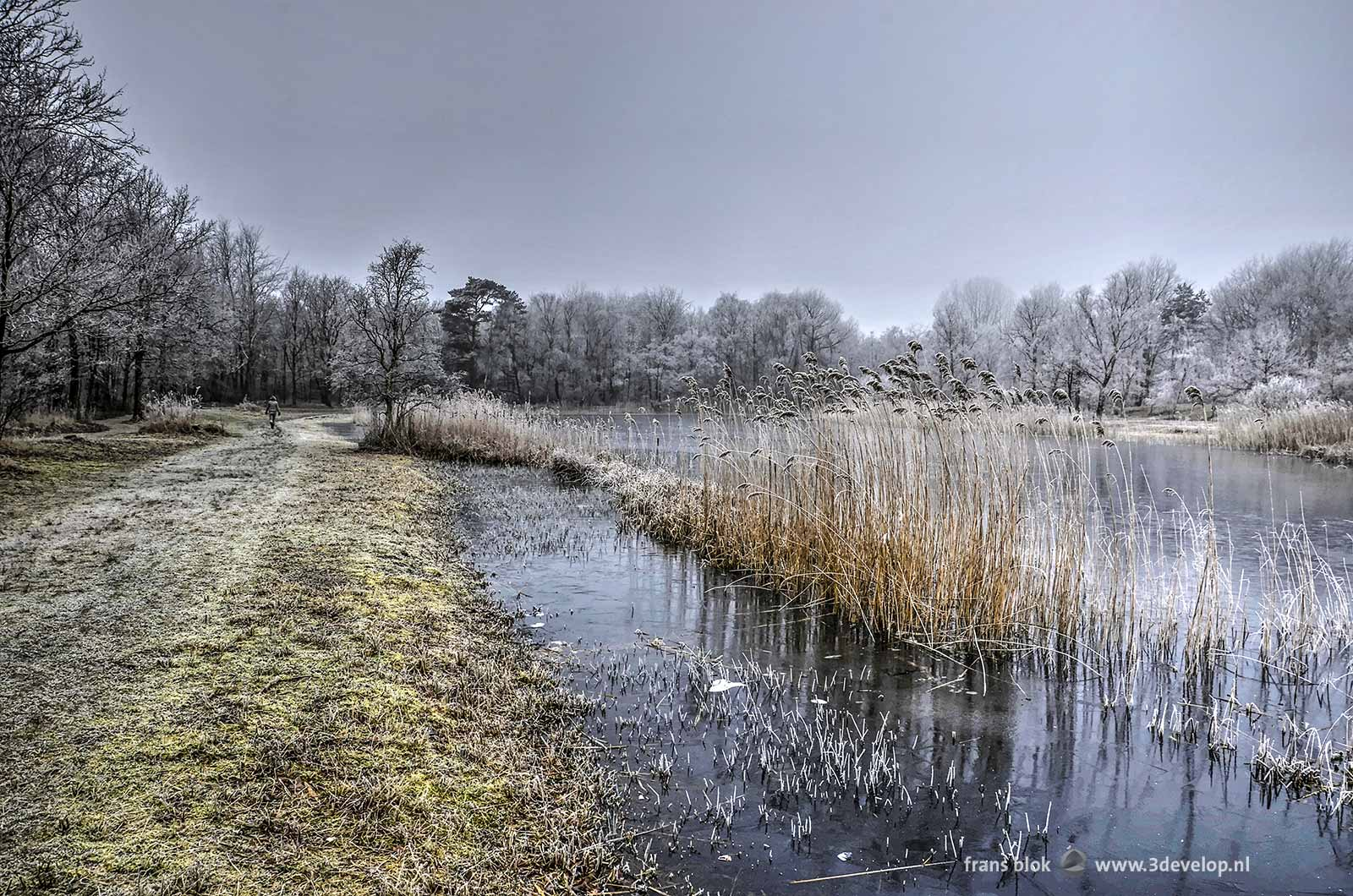 Wintry photo of frozen lake Tenella near Oostvoorne, with frost on reeds, trees and bushes and a lonesome hiker