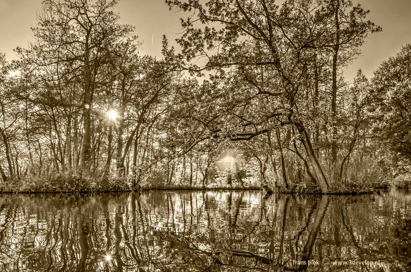 Black and white photo of the autumn in the Brediuspark in Woerden, The Netherlands with a low sun and the reflection of trees on the water surface, with a sepia tint applied in Photoshop