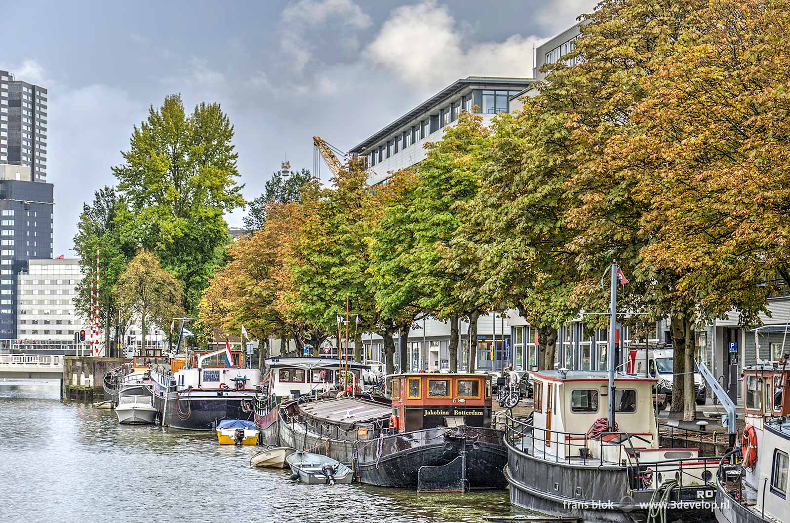 Houseboats, office buildings and discolouring trees on Scheepmakershaven in Rotterdam at the beginning of autumn