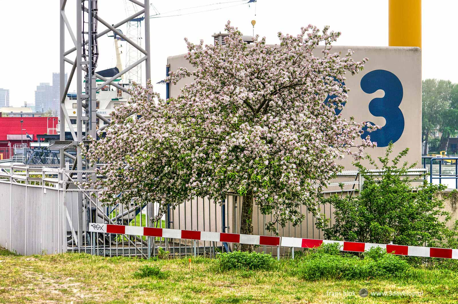 Blooming prunus tree on a somewhat odd location on an industrial zone in the Rotterdam district of Feijenoord