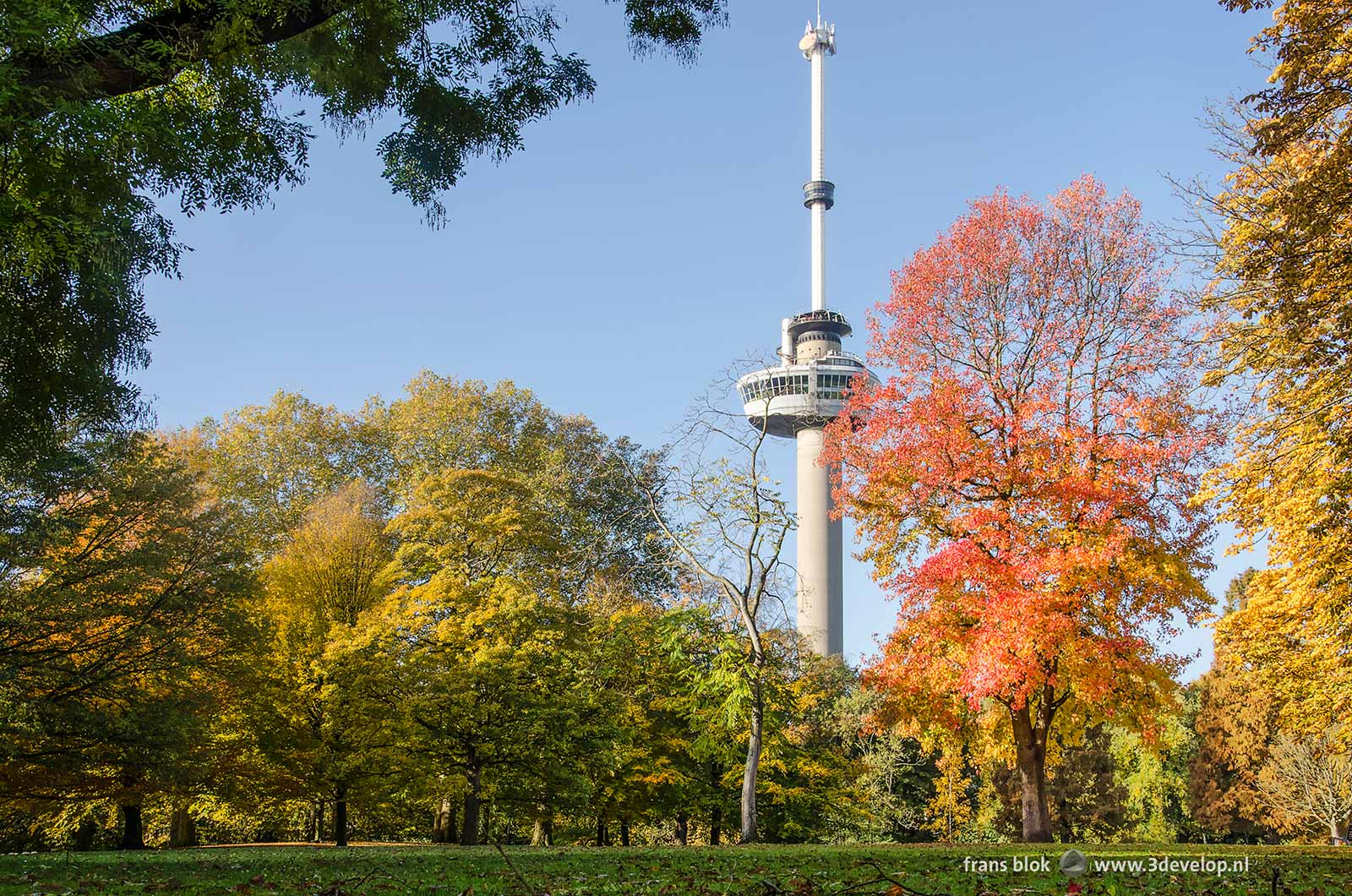 Autumn image of The Park in Rotterdam with a sweet gum tree (liquidambar styraciflua) as a big attention grabber next to the Euromast tower