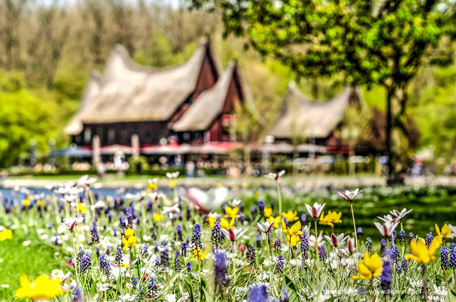 Paarse, gele en witte voorjaarsbloemen in een groene weide bij de Kralingse Plas met het rieten dak van het Minangkabauhuis op de achtergrond