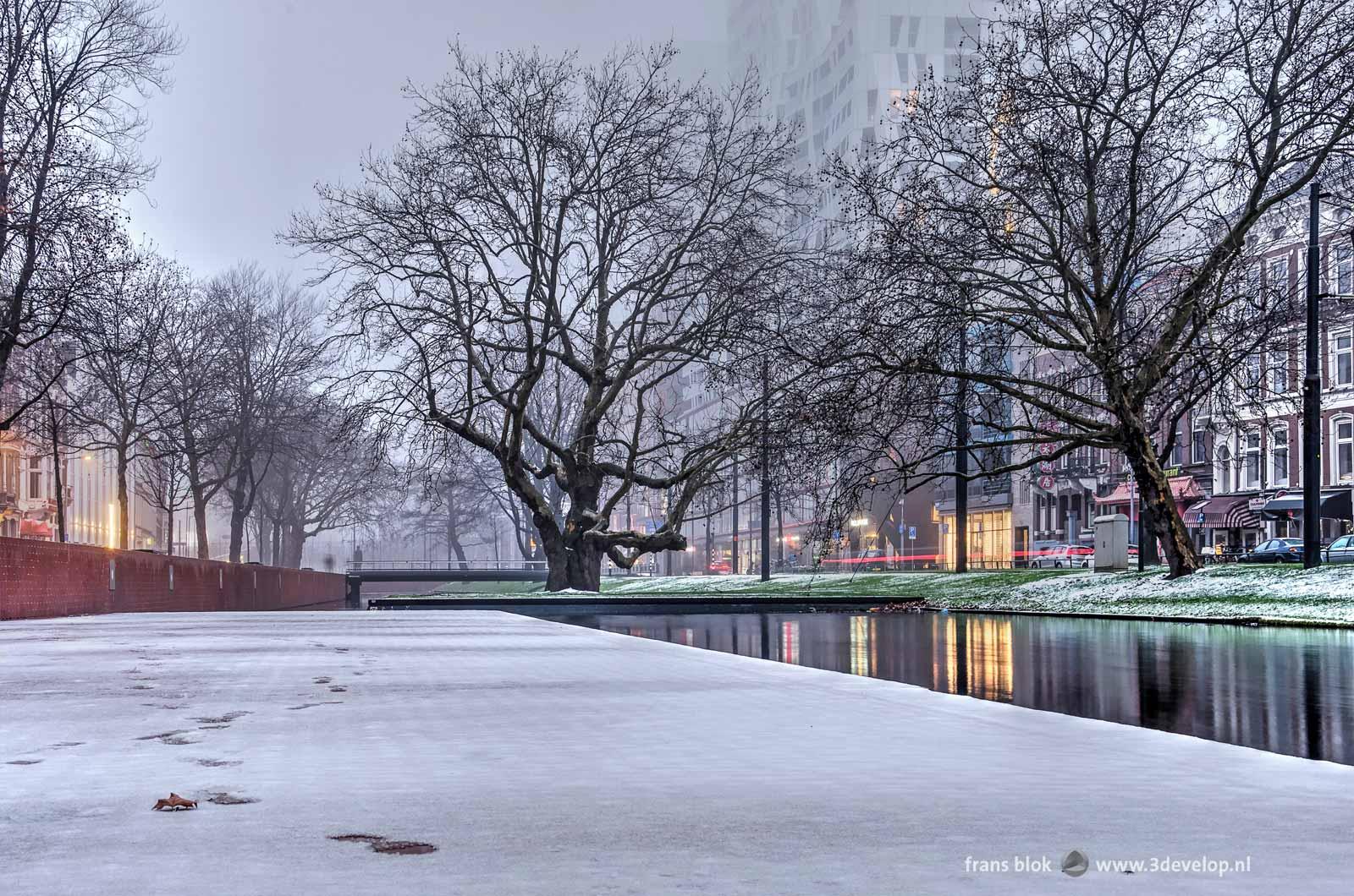 Foto gemaakt op een zondagochtend in december op de lage kade van de Westersingel in Rotterdam, met een dun laagje sneeuw, kale bomen en het Calypso-gebouw dat haast verdwijnt in de mist