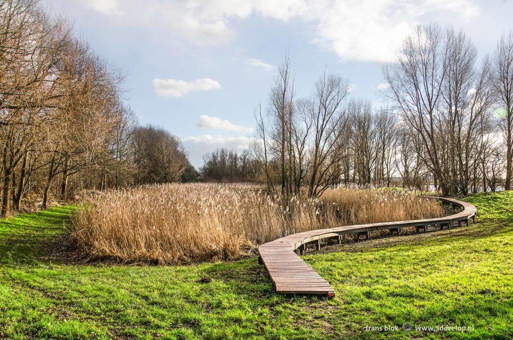 Wooden walkbridge along a field of reeds in nature reserve Visserijgriend (Fishing Willows) near Hoogvliet