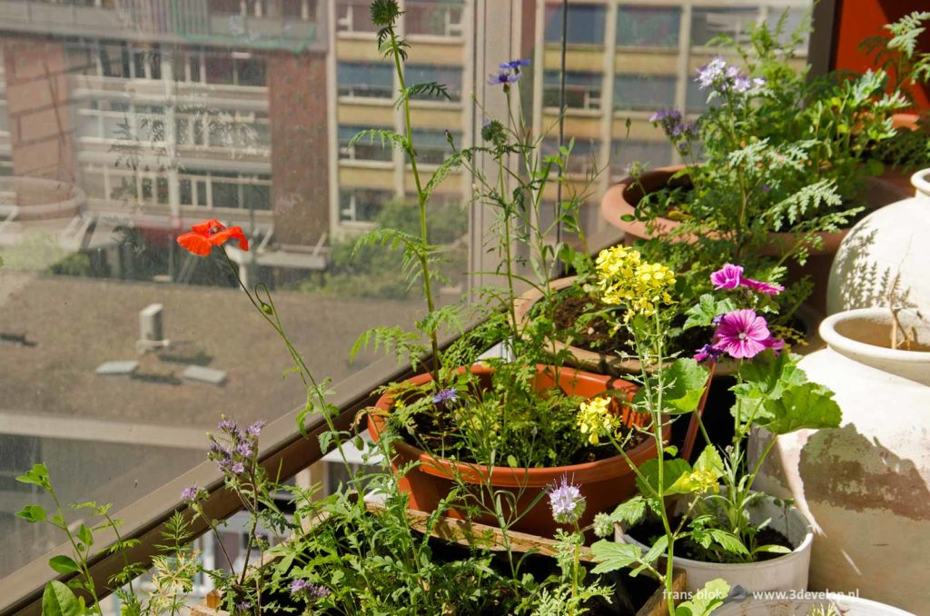 Overview of the bee restaurant, or the pots with wildflowers on a balcony of a flat in downtown Rotterdam, Holland