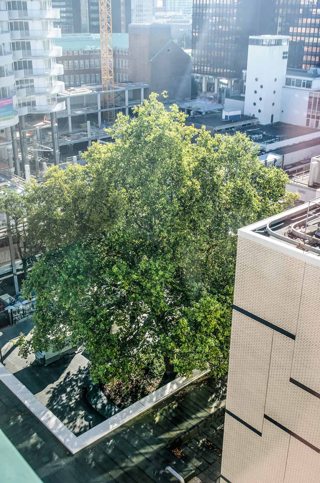 Aerial view of the Lijnbaan plane tree, nominated for Tree of the Year, on its little square between shops, apartments and offices
