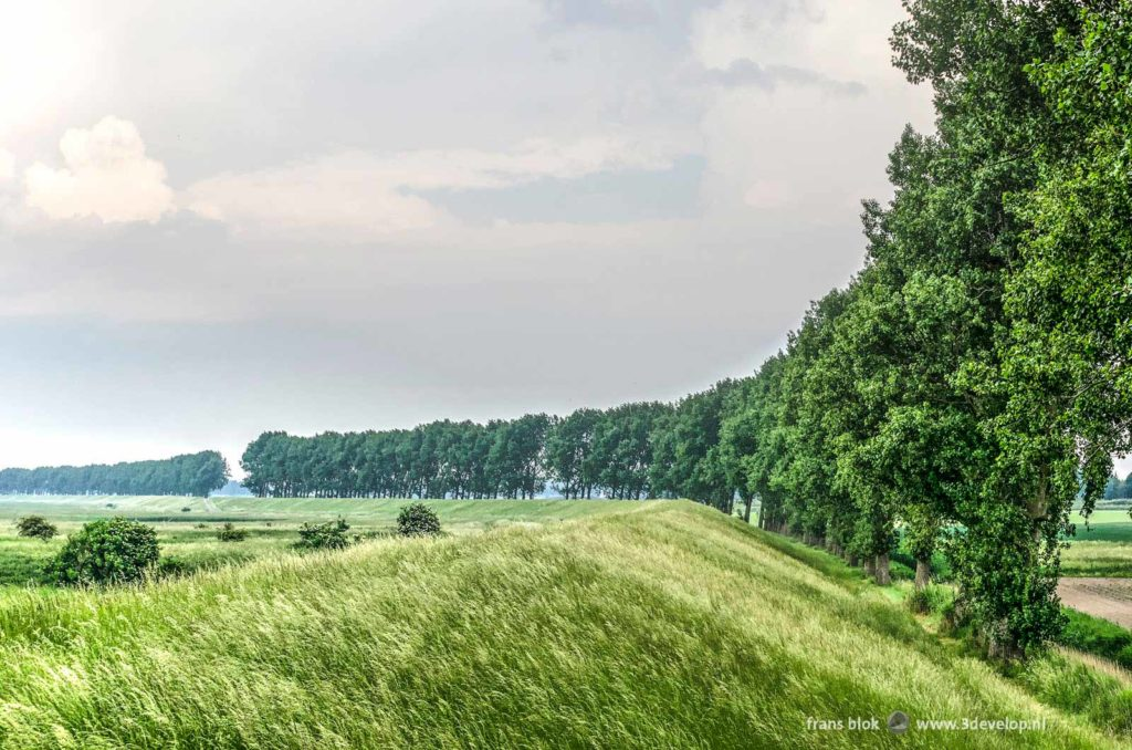 Dike with tall grass and a row of poplar trees between the fields and the wetlands of Flakkee, part of a long distance trail around lake Grevelingen, The Netherlands