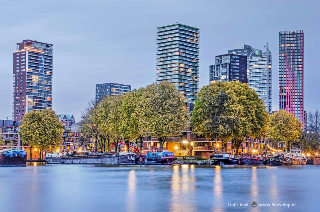 Leuvehaven harbour and Wijnhaven island in Rotterdam on an autumn eveing, with historic barges, large trees and modern skyscrapers