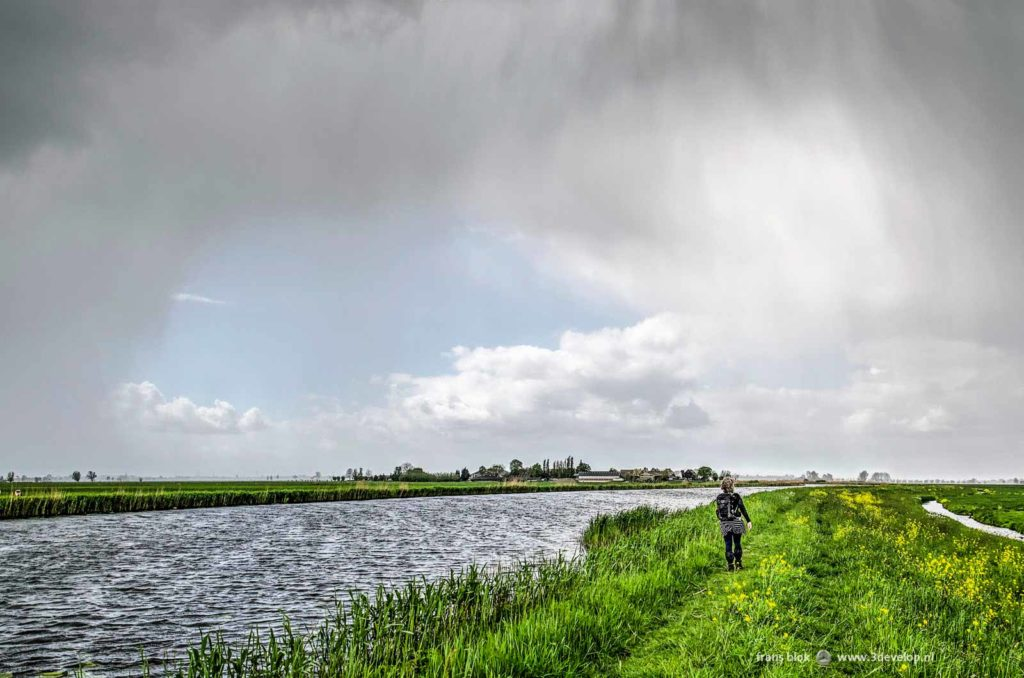 Hiker on the Pilgrim long distance trail on a levee with grass, reeds and rapeseed along a canal in alblasserwaard polder, The Netherlands, near hamlet De Donk, on a day in springtime with heavy showers