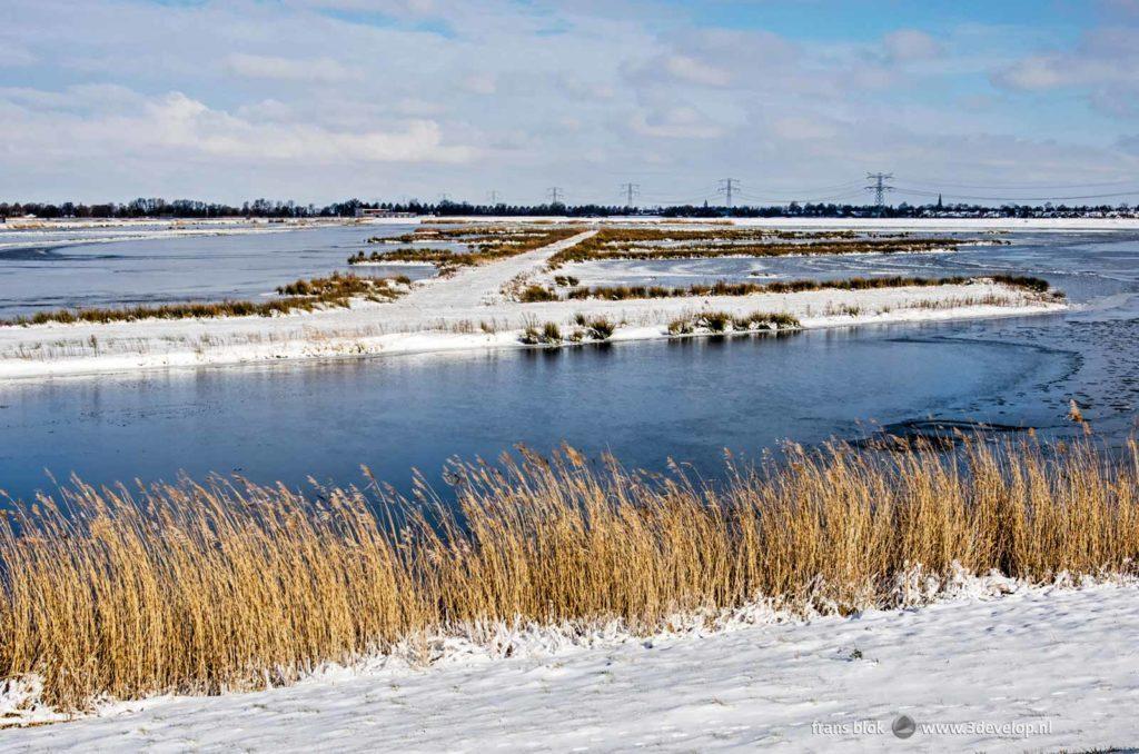 Hollands wintertafereel in de Eendrachtspolder bij Rotterdam met sneeuw, ijs en rietpluimen