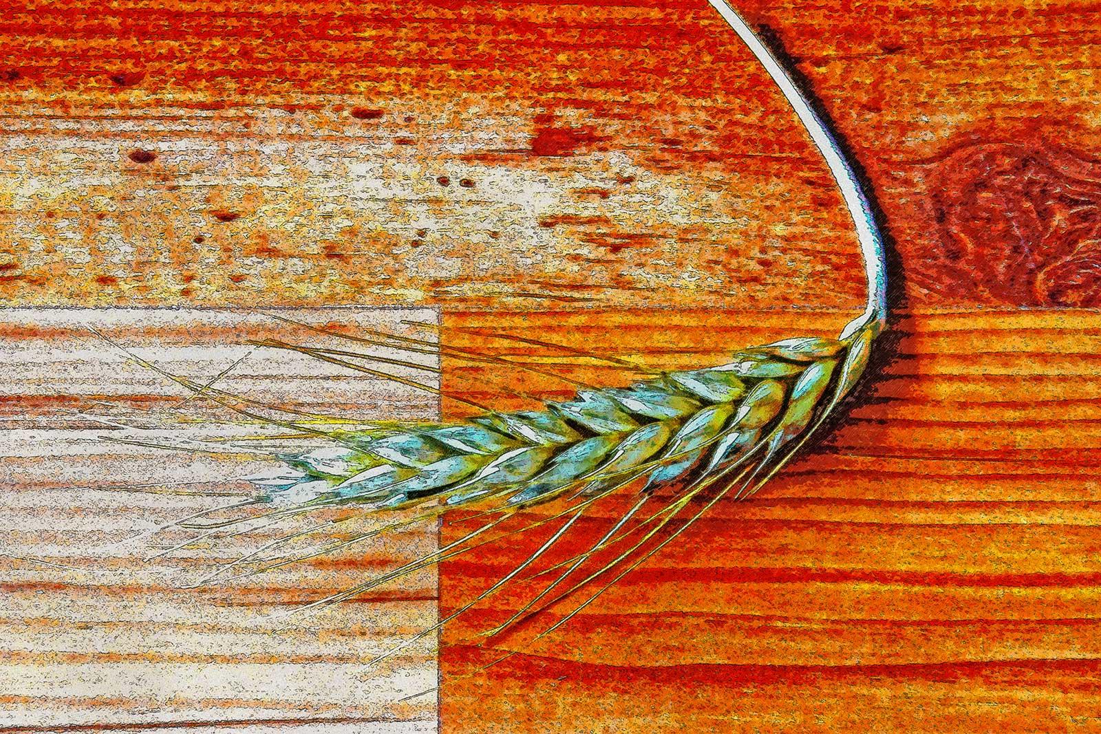Ear of corn on a woodstrip floor