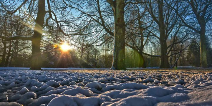 Photo taken low above the ground in a snowcovered Park in Rotterdam, illuminated by a low sun shining through the trees
