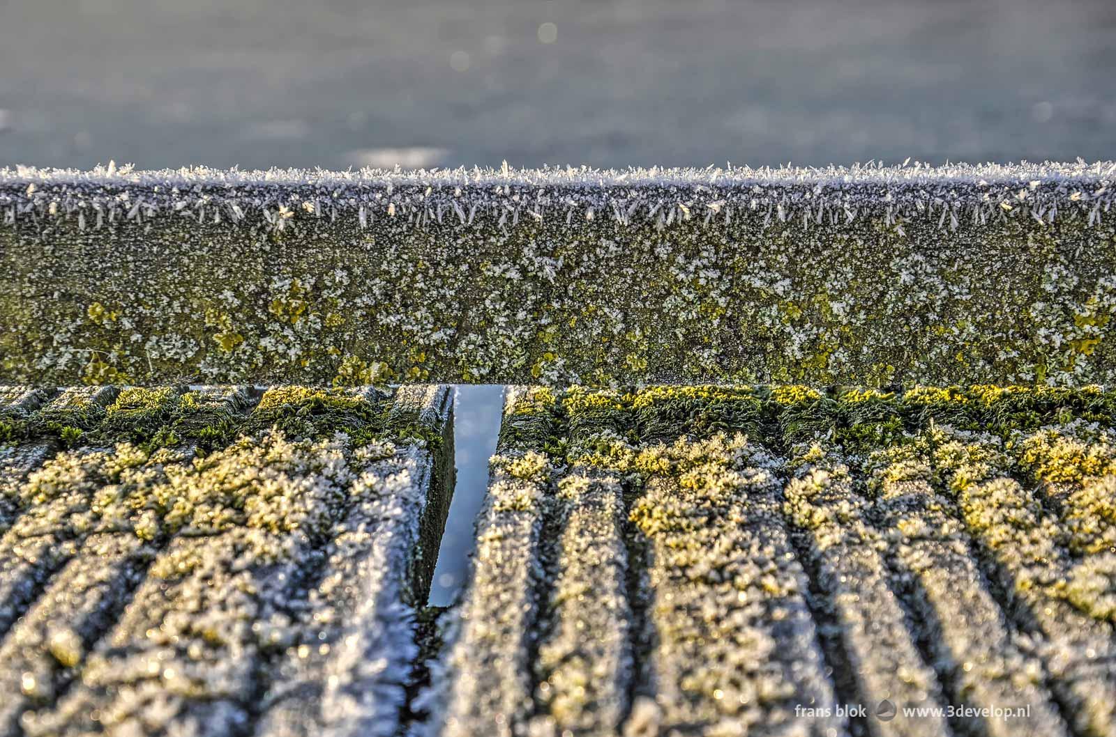 Winters beeld van een houten vlonder op de Kralingse Plas in Rotterdam, bedekt met mos en rijp
