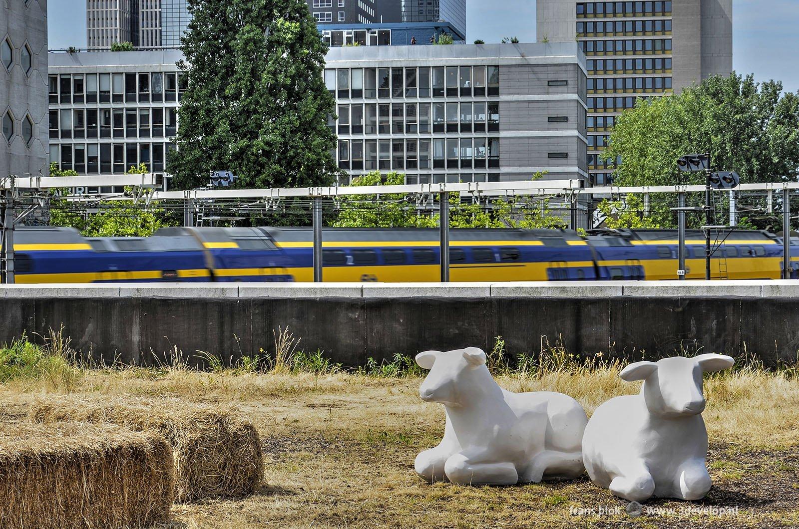 Kunststof schaapjes op het dak van Station Hofplein tijdens de Rotterdamse Dakendagen met op de achtergrond een gele trein van NS en de Skyline van Rotterdam.