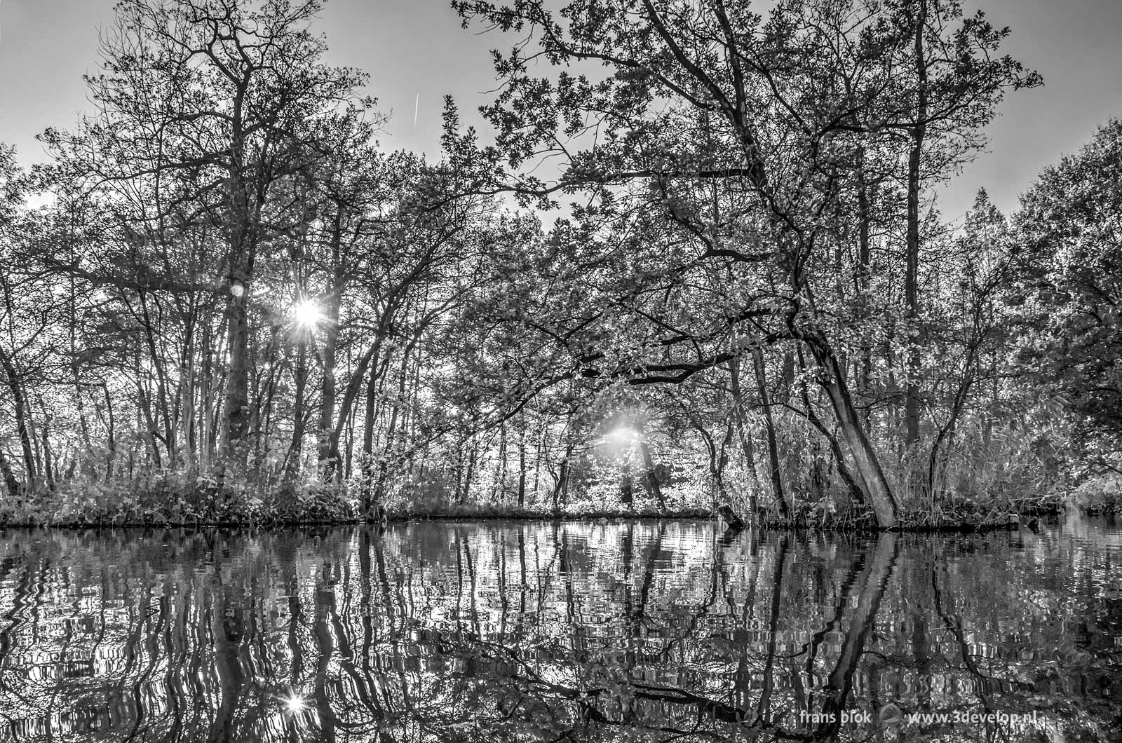 Black and white photo of the autumn in the Brediuspark in Woerden, The Netherlands with a low sun and the reflection of trees on the water surface, with a greenfilter applied in Photoshop