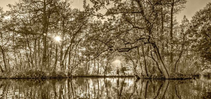 Zwart-witfoto gemaakt in de herfst in het Brediuspark in Woerden met een laagstaande zon en de spiegeling van bomen in het water, met een sepiatint aangebracht in Photoshop