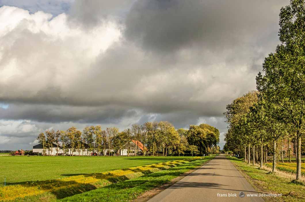 Lange rechte weg met bomenrij en een boerderij in de Noordoostpolder