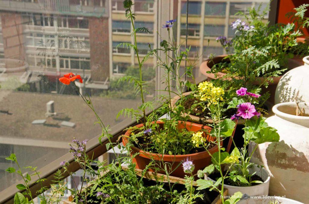 Overzichtsfoto van de bijenbrasserie, oftewel de potten met veldbloemen op het balkon van een flat in het centrum van Rotterdam
