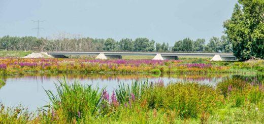 Een nieuwe betonnen brug in een landschap met kreken en bloemenvelden in de Noordwaard in de Biesbosch op een zomerdag