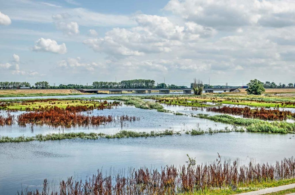 Fields with sorrel and other vegetation interspersed with water along the Reevediep near Kampen with a concrete bridge in the background on a beautiful summer day