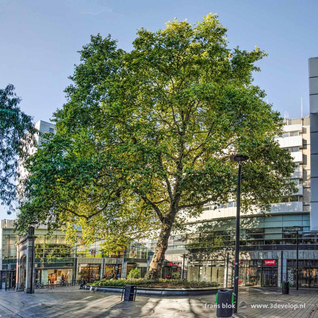 Groothoekfoto van de Lijnbaanplataan in Rotterdam op zijn pleintje tussen winkels en de poort van het voormalige ziekenhuis