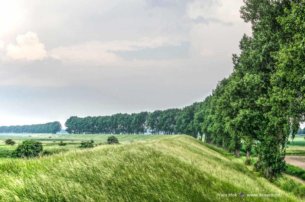 Dijk met hoog gras en een rij populieren tussen het akkerland en de slikken van Flakkee, onderdeel van een lange-afstandswandeling rond de Grevelingen