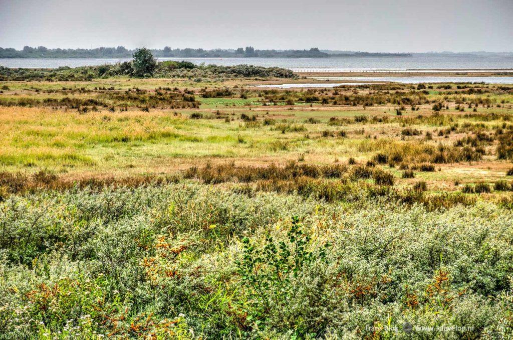 Struikjes, gras en andere lage vegetatie op de Slikken van Flakkee met op de achtergrond de Grevelingen