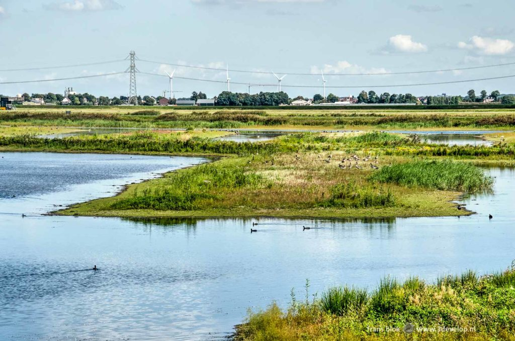 Landscape in Eendragtspolder near Rotterdam, The Netherlands, with ponds, low vegetation and in the background wint turbines and high voltage pylons