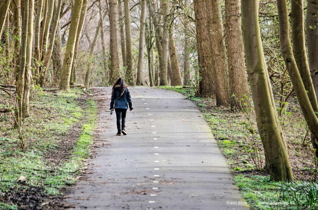 Hiker on an asphalt path in Ruigeplaatbos forest near Hoogvliet, The Netherlands