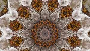 Detail of Witch Hazel, an abstract, symmetric, caleidoscopic image created by Frans Blok