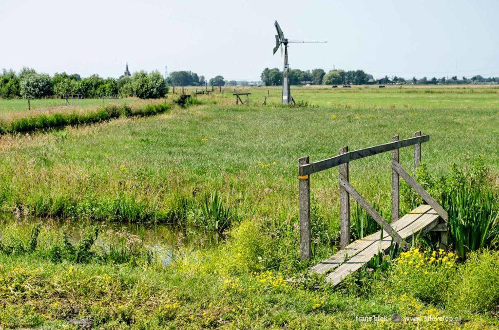 Wandelpad met bruggetje door de weilanden tussen Schipluiden en 't Woudt in Midden-Delfland