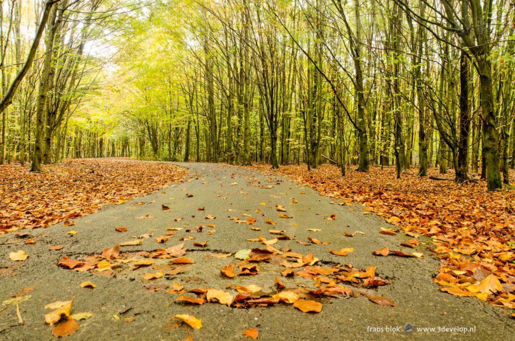 Met bladeren bedekt pad door het Baleibos bij Zoetermeer op een regenachtige herfstdag